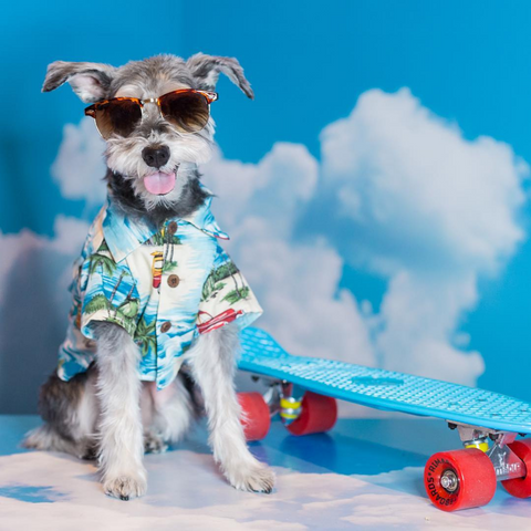 DJANGO Dog Blog - Remix Hawaiian Dog Shirt