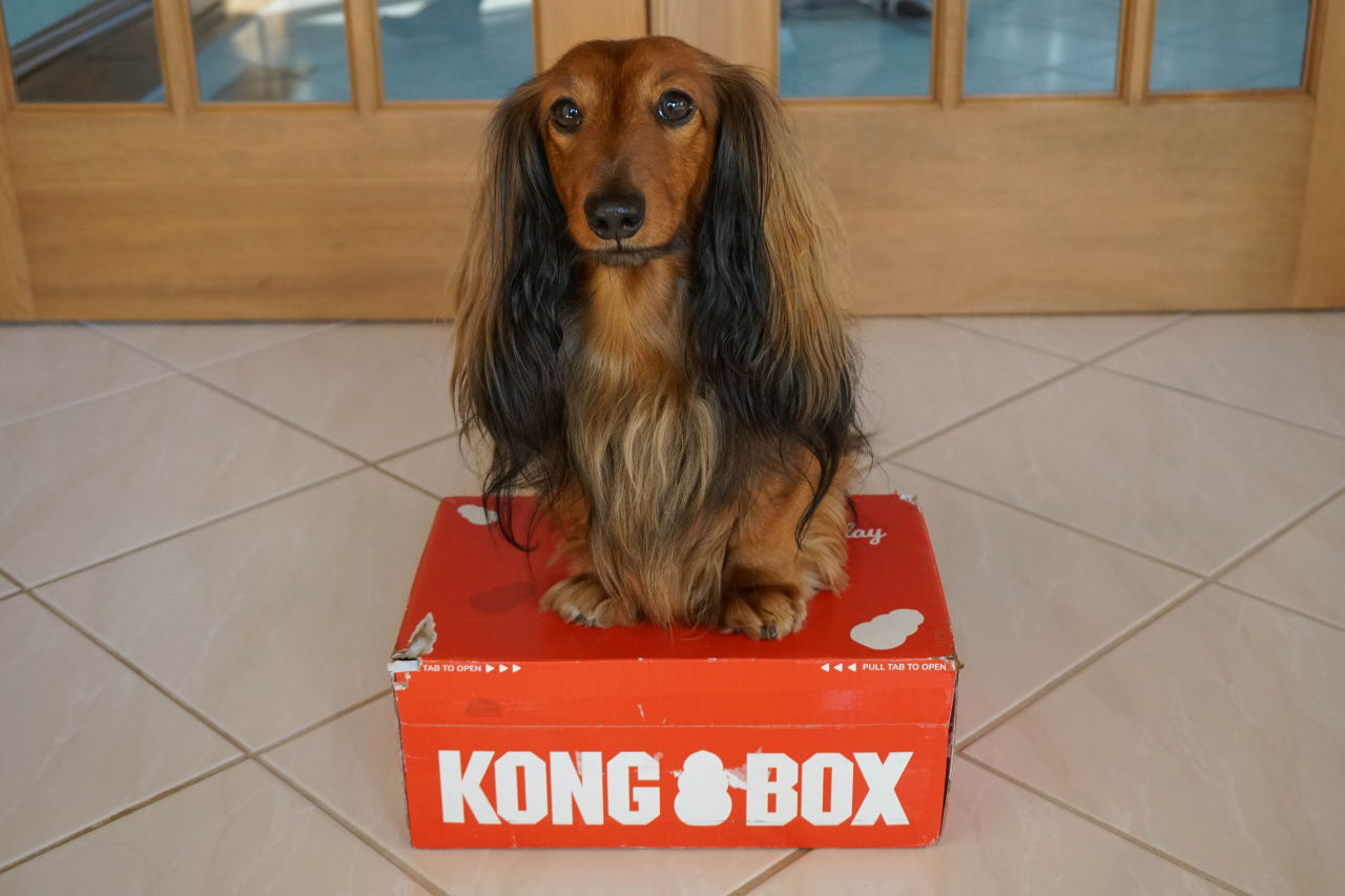 DJANGO KONG Box Subscription Review - djangobrand.com