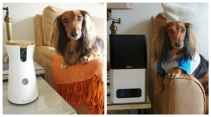 DJANGO product review - Furbo and Petcube Treat Tossing Dog Cameras