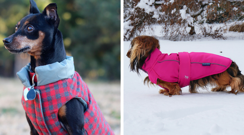 DJANGO's best selling Reversible Puffer Winter Dog Coat and City Slicker All-Weather Dog Raincoat and Windbreaker are available on djangobrand.com