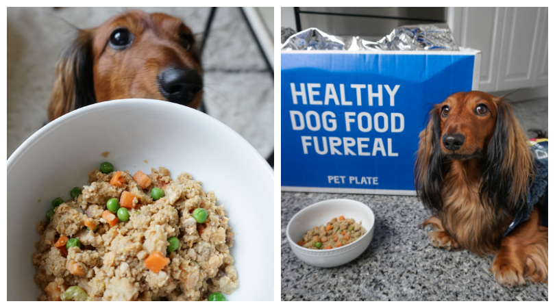 Django absolutely loves his ready-to-eat Pet Plate meals