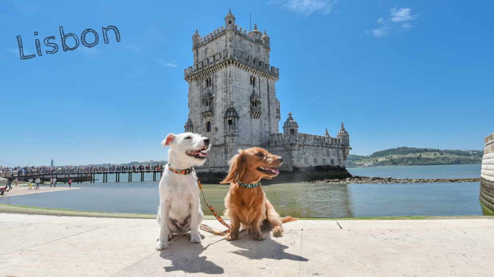 DJANGO: An Interview with Globetrotting Pups Django & Chloe - Lisbon - djangobrand.com