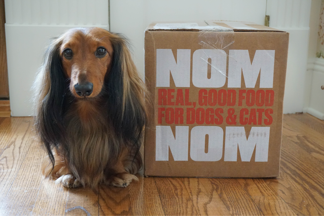 DJANGO Dog Blog - Nom Nom Dog Food Review | Our Experience with the Fresh Dog Food Subscription Service