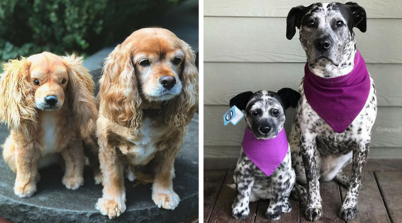 Petises makes custom stuffed animals of your pet