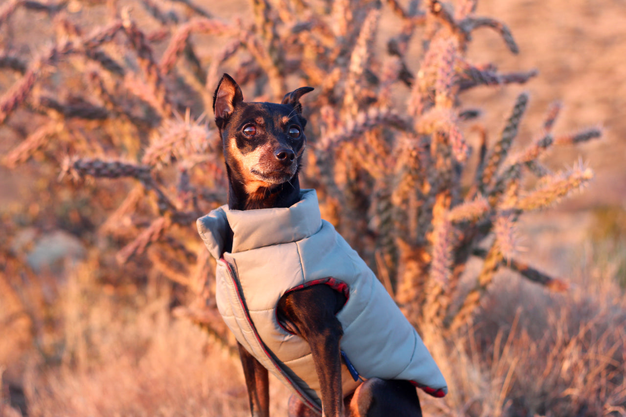 DJANGO's Reversible Puffer Winter Dog Coat is insulated, lined, and designed for the coldest winter weather