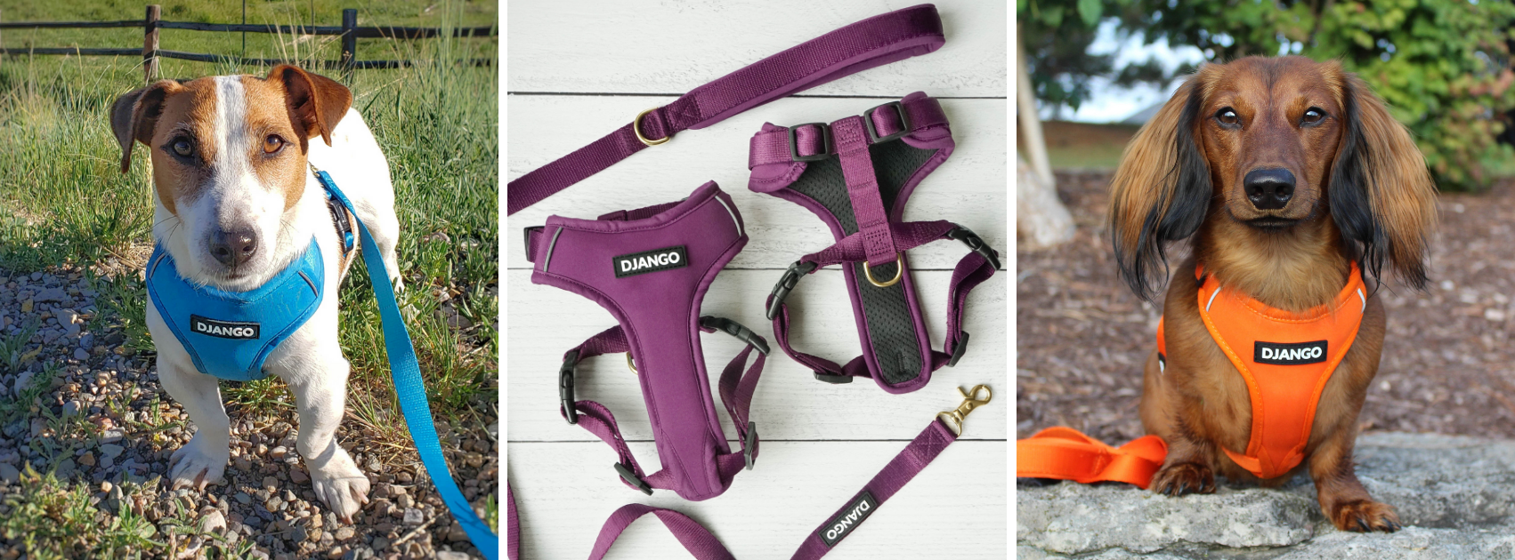 Shop DJANGO's best selling and 5 star rated Adventure Dog Harness, Collar, and Leash Collection on djangobrand.comcollection