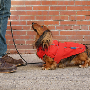 DJANGO City Slicker All-Weather Dog Jacket, Raincoat & Winter Snow Coat - Cherry Red - djangobrand.com