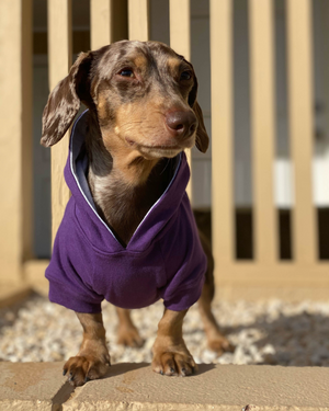 DJANGO Dog Hoodie in Royal Purple - Super soft and stretchy dog hoodies and sweaters - djangobrand.com