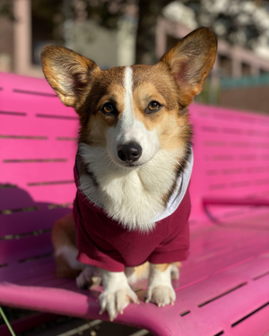 DJANGO Dog Hoodie in Burgundy Red - Super soft and stretchy dog hoodies and sweaters - djangobrand.com