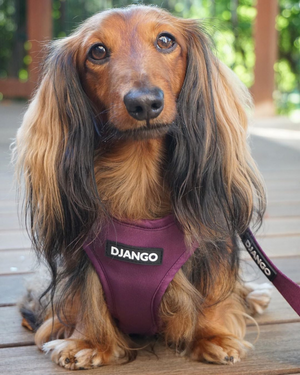Django Adventure Dog Harness - Comfortable Neoprene Everyday and Weather-Resistent Dog Harness in Plum Purple - djangobrand.com
