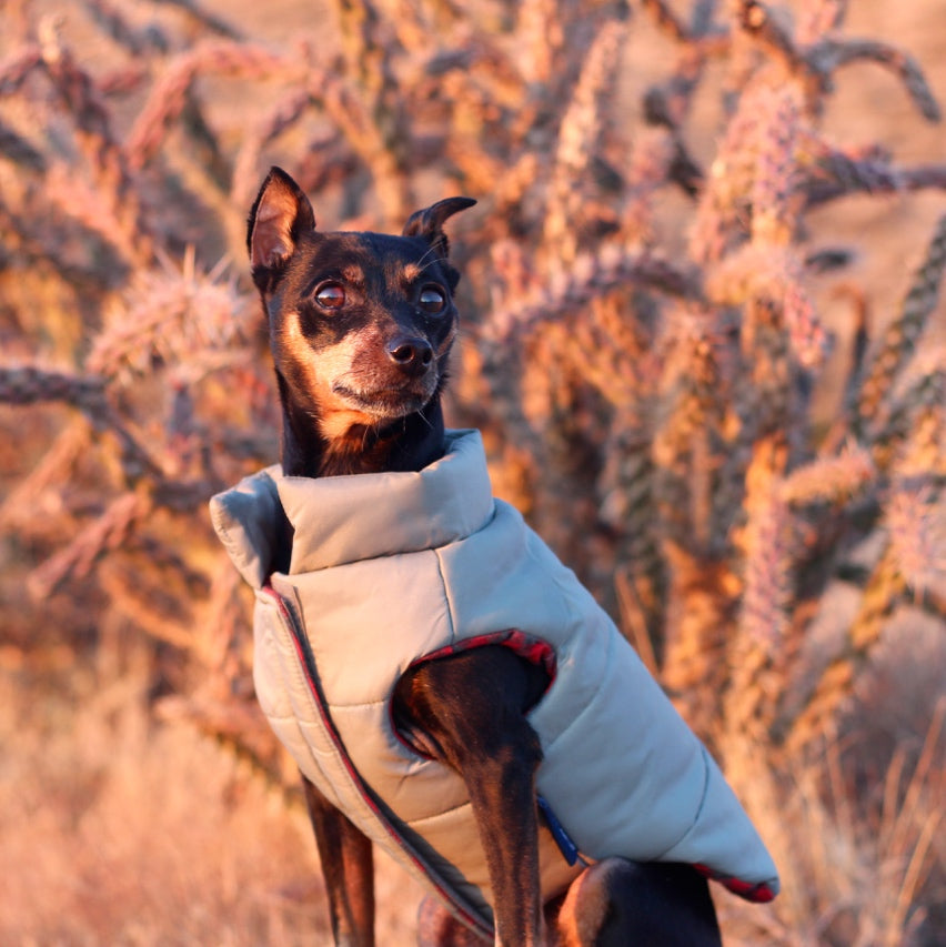 DJANGO - The Reversible Puffer Dog Coat - Sage Green - djangobrand.com