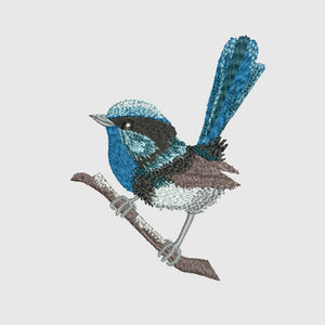 Native Blue Wren 2