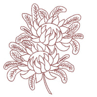 Native Waratah  Spray - Redwork