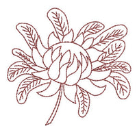 Native Waratah 2 - Redwork