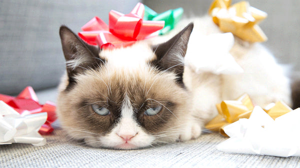 10 Kitties who are more excited for Catmas than you