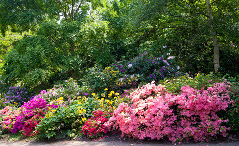 garden with flowering shrubs