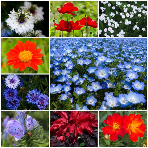 Annual Flower Seed Mix - Union Jack - 3g - RP Seeds