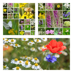 British Native Wildflower Seed Mixtures Collection - 3 Packets