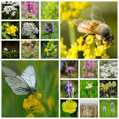 British Native Wildflower Seeds - Bee & Butterfly Mix - 2g or 10g - RP Seeds