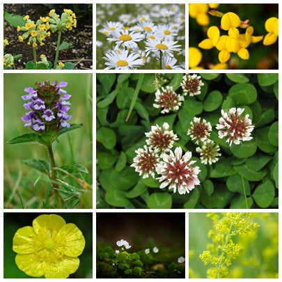 British Native Wildflower seeds - Flowering Lawn Mix - 2g - RP Seeds