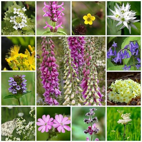 Wildflower seeds - Woodland & Shade Mix - 2g. - RP Seeds
