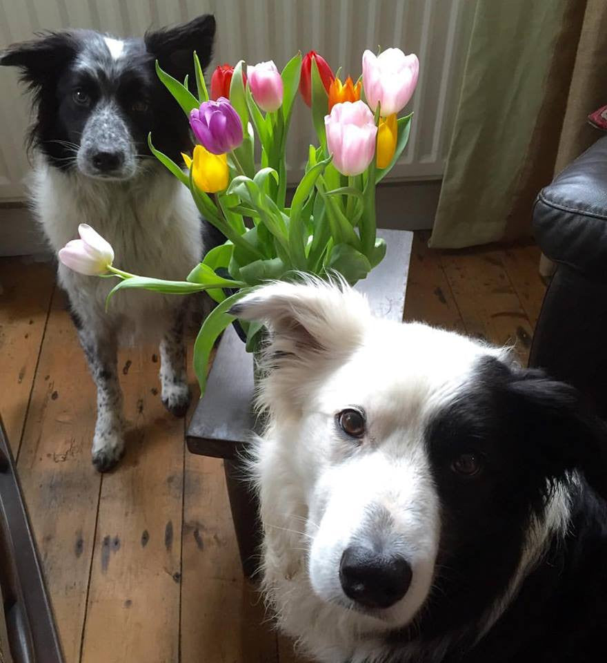 ‪A little dab of colour to warm up your day. Love from us collies.