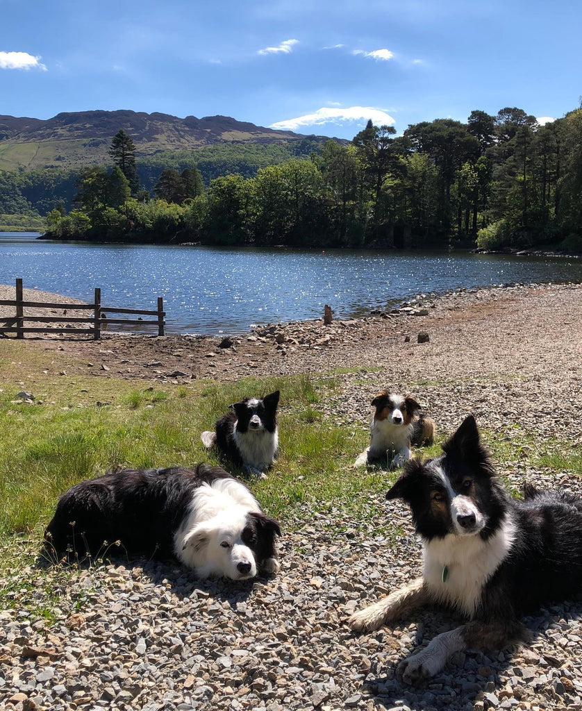 Search dogs deserve a day off too!