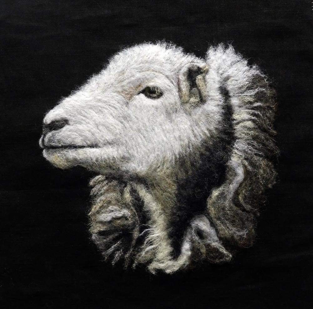 Beautiful Ewe