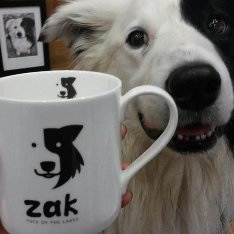 For Zak the Collie Dog Fans