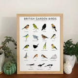 A3 Prints of Birds, Animals & Plants, Original Illustrations by Kate Broughton