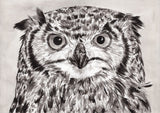 IB, Gina Andrews, InkBison, indian ink, inks, painting, pets, prints, animal, owl