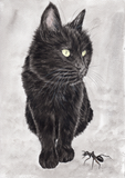 IB, Gina Andrews, InkBison, indian ink, inks, painting, pets, prints, animal, cat
