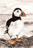 IB, Gina Andrews, InkBison, indian ink, inks, painting, pets, prints, animal, puffin