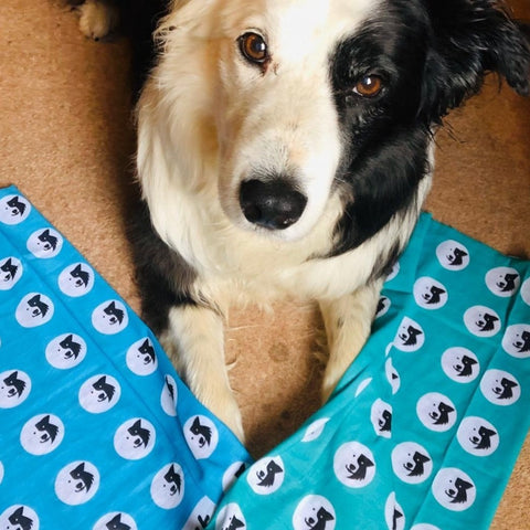 DEAL for 2 Recycled Buffs - Zak the Collie Dog