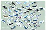 Whale Sticker Variety Pack - 45 Stickers