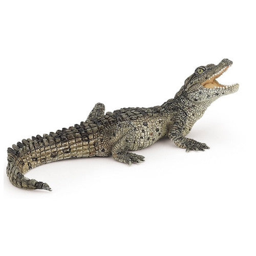 Crocodile, small