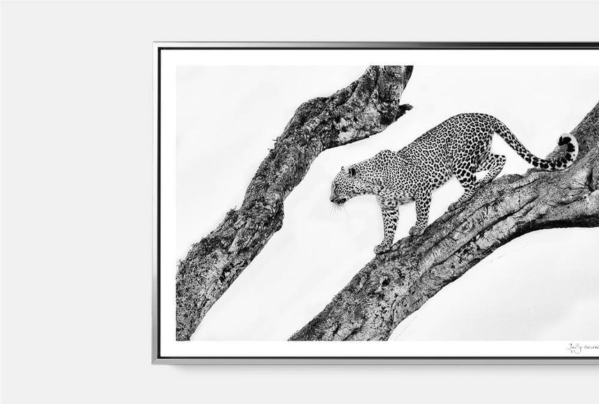 Featured Artwork | Bahati, The Spotted One
