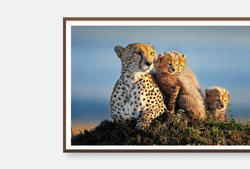 Featured Artwork | Shakira and Cubs