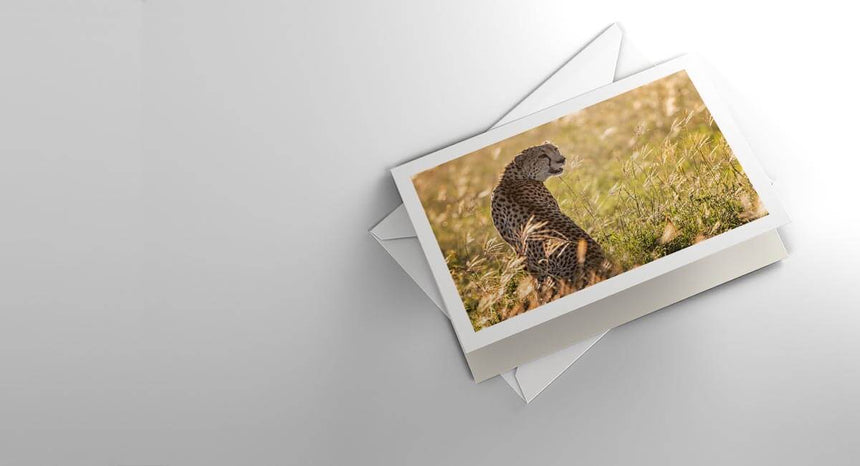 Fine art greeting card by Jonathan & Angela Scott, depicting a photograph of a cheetah amidst the grass in Maasai Mara.