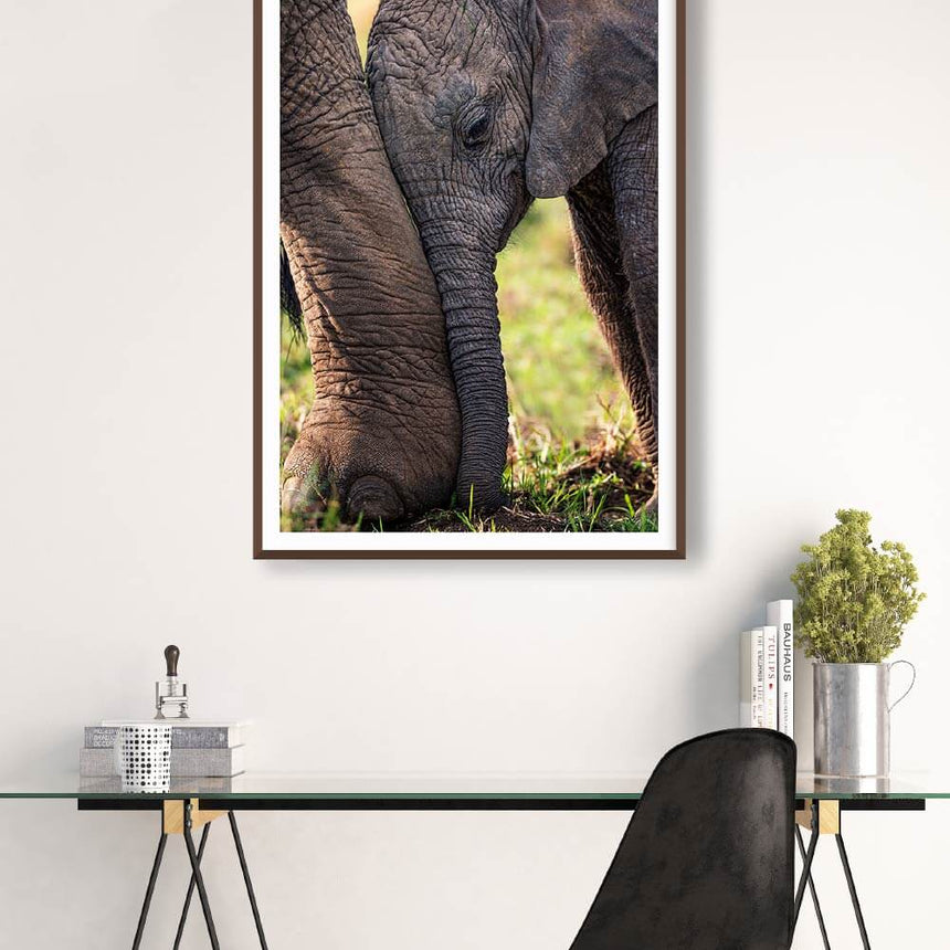 Fine art photographic print by Jonathan and Angela Scott, depicting a cute baby elephant in the Maasai Mara, Kenya.