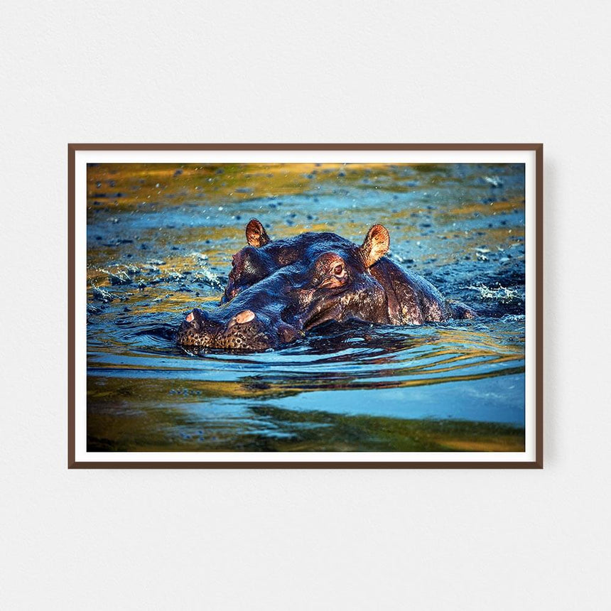 Fine art photographic print by Jonathan and Angela Scott, depicting a hippopotamus in the water in the Maasai Mara, Kenya.