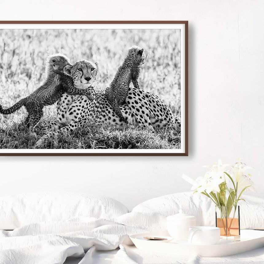 Fine art photographic print by Jonathan and Angela Scott, depicting cheetah mother Shakira and her cubs in Masai Mara, Kenya.