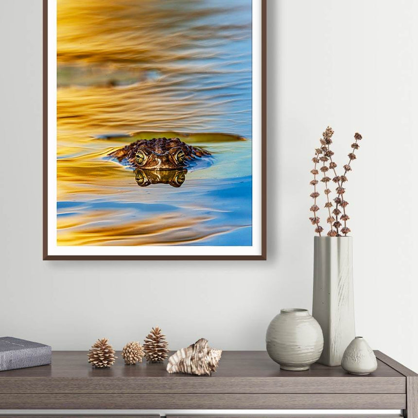 Fine art photographic print by Jonathan and Angela Scott, depicting a frog swimming through beautiful water in Argentina.