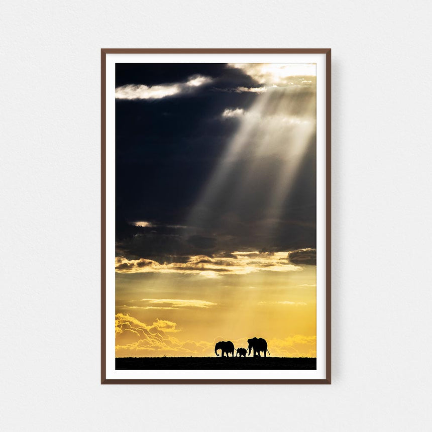 Fine art photographic print by Jonathan and Angela Scott, depicting afternoon light over the elephants in Maasai Mara, Kenya.