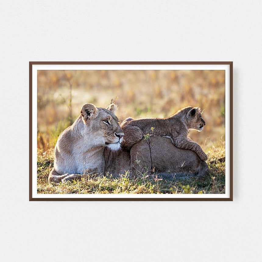 Fine art photographic print by Jonathan and Angela Scott, depicting Toto the cheetah cub legend in Maasai Mara, Kenya.