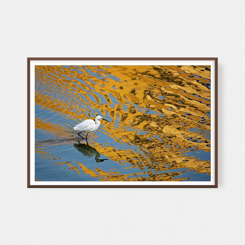Fine art photographic print by Jonathan and Angela Scott, depicting a beautiful egret walking across water in Jaipur, India.