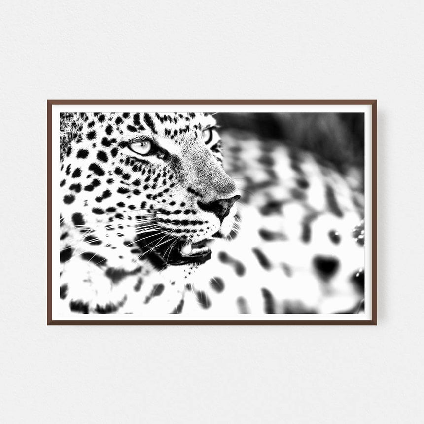 Fine art photographic print by Jonathan & Angela Scott, depicting a black & white portrait of a leopard in Masai Mara, Kenya.