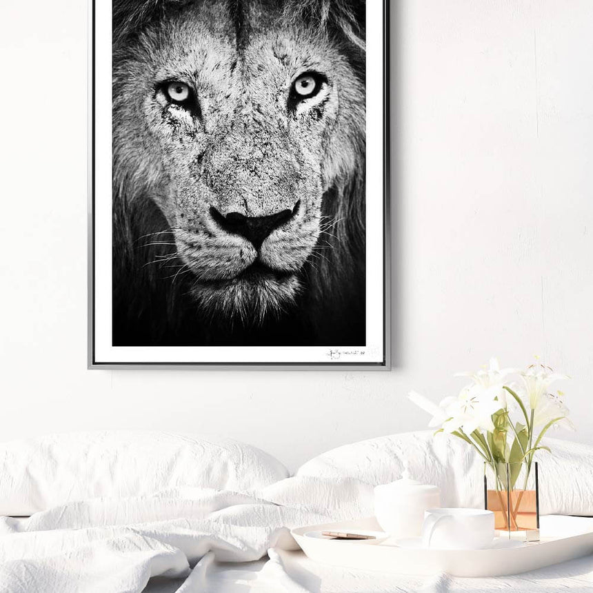 Limited edition photographic print by Jonathan and Angela Scott, depicting a portrait of a male lion in Maasai Mara, Kenya.