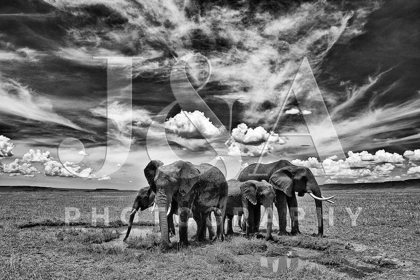 Limited edition photographic print by Jonathan and Angela Scott, depicting a herd of elephants in Maasai Mara, Kenya.