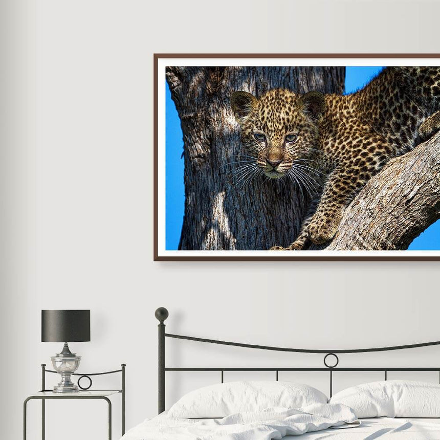 Fine art photographic print by Jonathan and Angela Scott, depicting a leopard cub in the trees in Maasai Mara, Kenya.